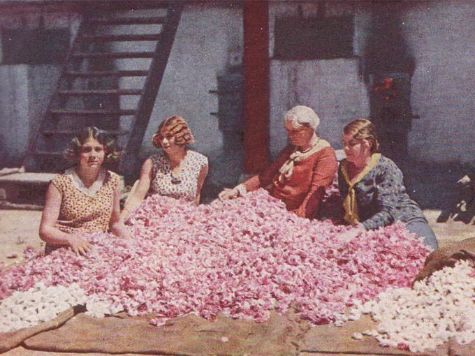 Bulgarian_Women_roses