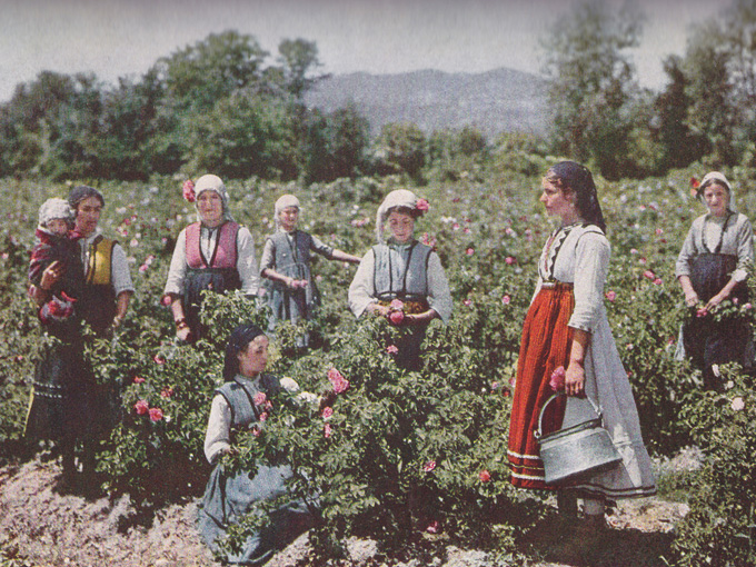 Rose_Picking_1932_2
