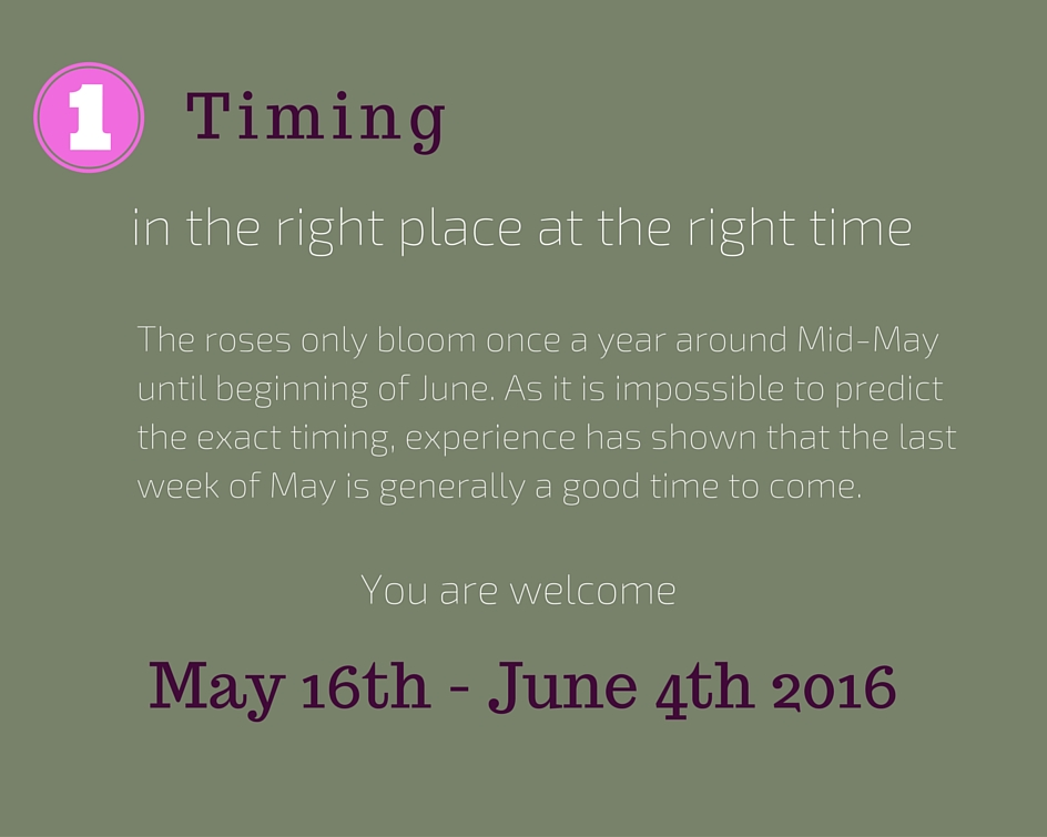 When to come for rose picking